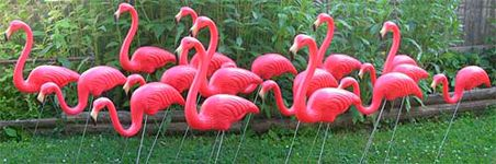 """Some of our local high school seniors do this as a fund raiser.  You pay to have a yard """"flocked"""".  Love it!"""