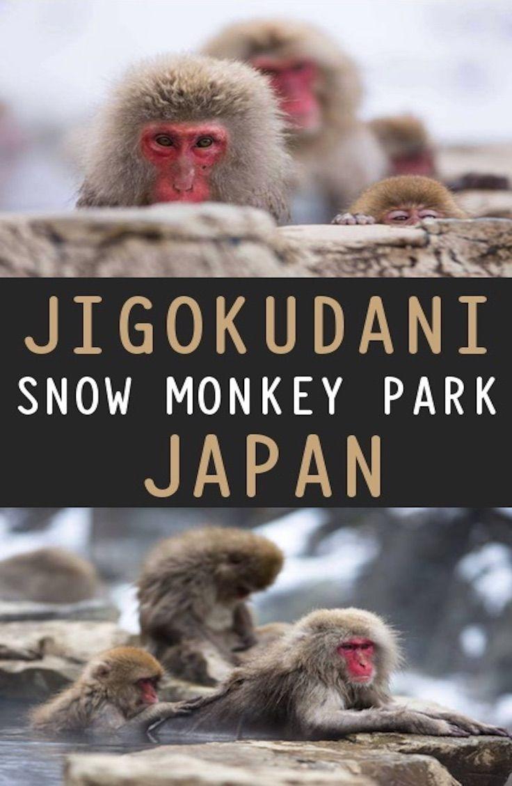 Snow Monkey Park - Jigokudani, Japan: Complete Guide