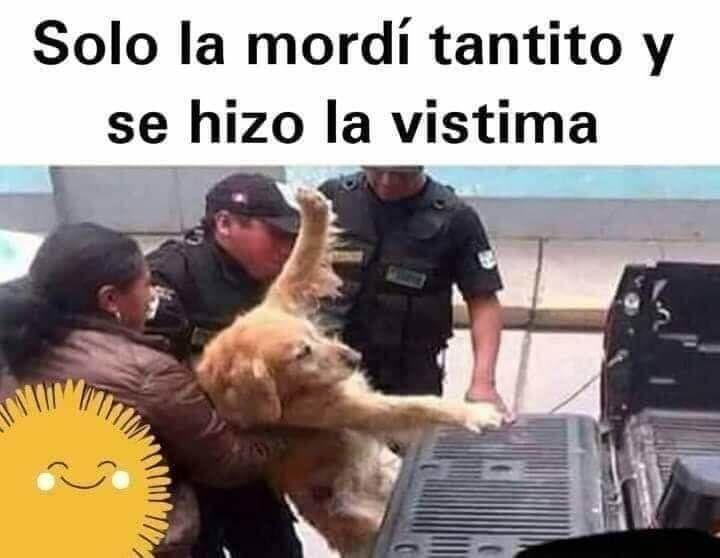Pin De Sowi En Jaja En 2020 Amo A Los Animales Memes De Animales Amor Animal