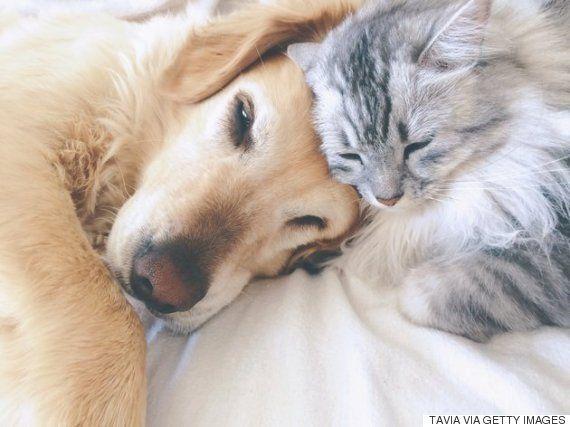 ペットだって、ホームレスの家族なんだ。一緒にすごせるシェルター誕生