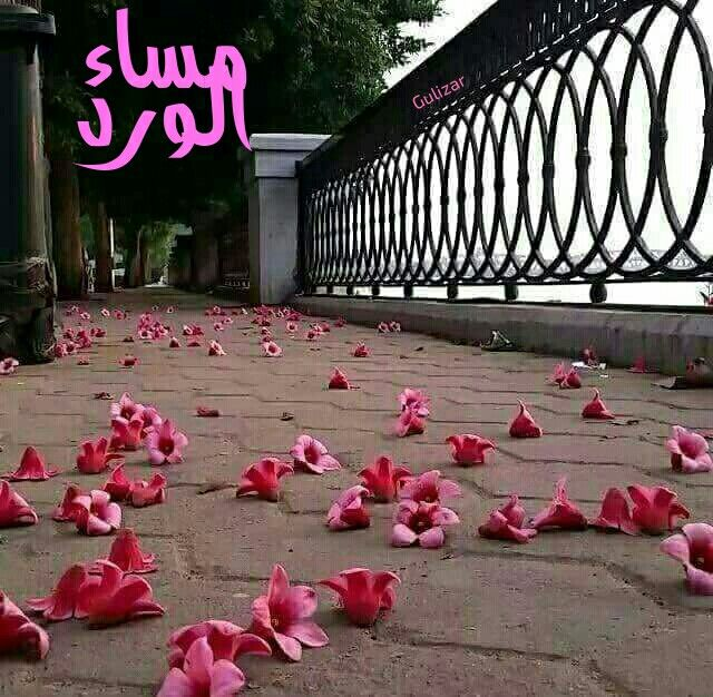 الثقة بالله Islamic Love Quotes Arabic Quotes Words