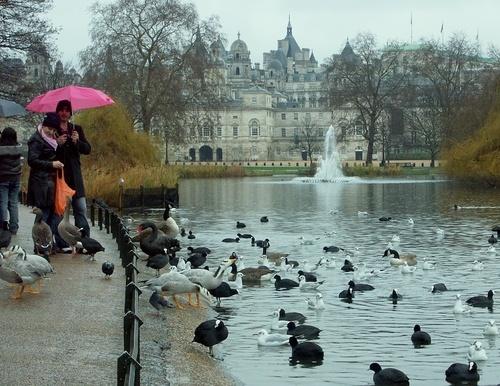 St. James Park, London, England Feed the ducks in St James' Park. Quack.