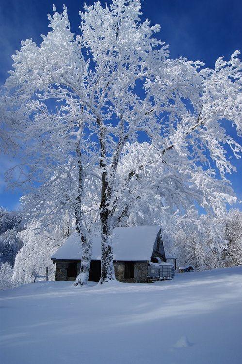 Maison, cozy, neige                                                                                                                                                                                 Plus