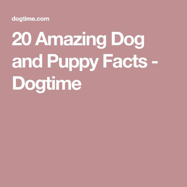 20 Amazing Dog and Puppy Facts - Dogtime
