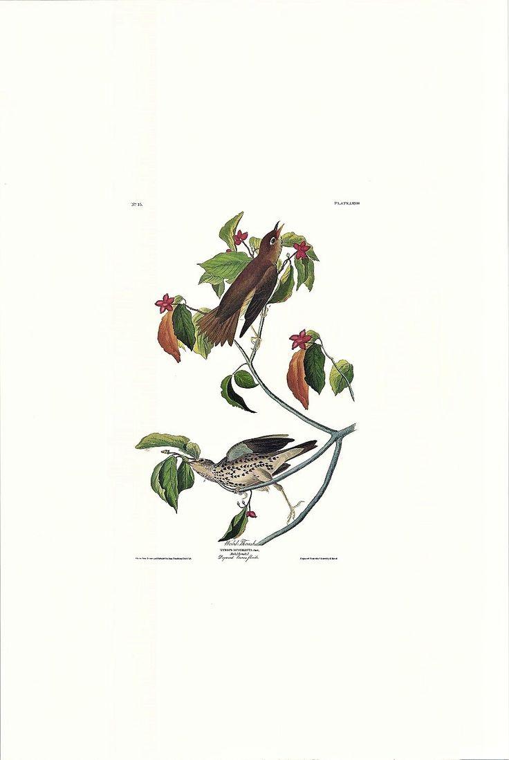 Princeton Audubon Wood Thrush