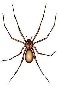 Jill's Home Remedies: How To Repel Spiders Naturally