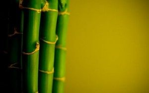The Bamboo Leader