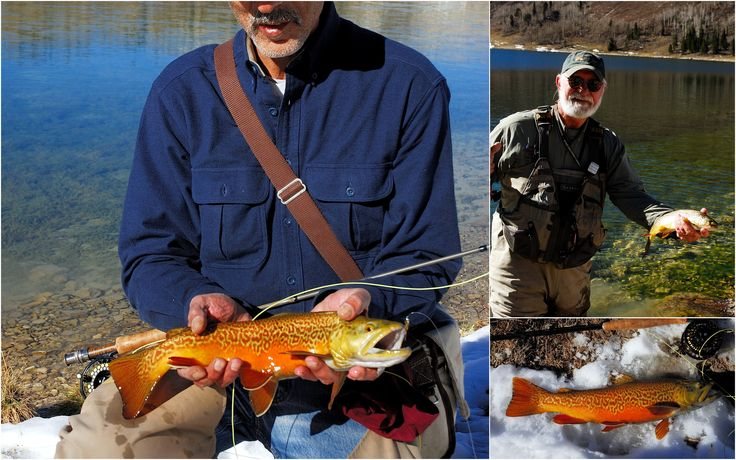 17 best images about tiger trout on pinterest utah for Best fishing in utah