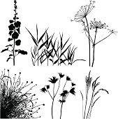 Луг растений силуэты