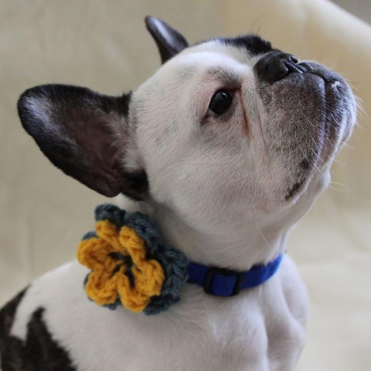 french bulldog flower