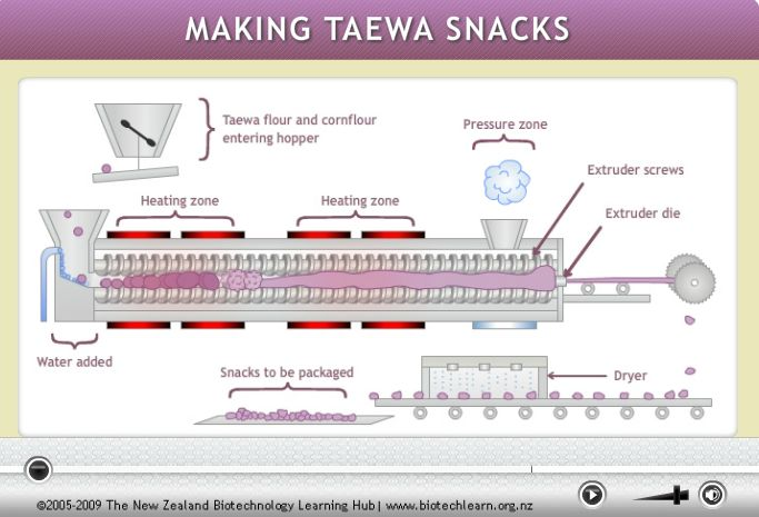 Watch the extrusion process for making crispy snacks from taewa (Māori potatoes). These prototype snacks are being made at a pilot plant at the Riddet Institute in Palmerston North.