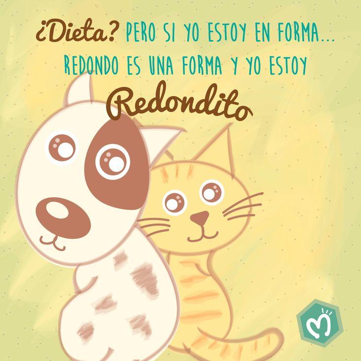 ¿Dieta? Pero si yo estoy en forma… Redondo es una forma y yo estoy redondito. #Mascotas #Gatos #Perros #Migas