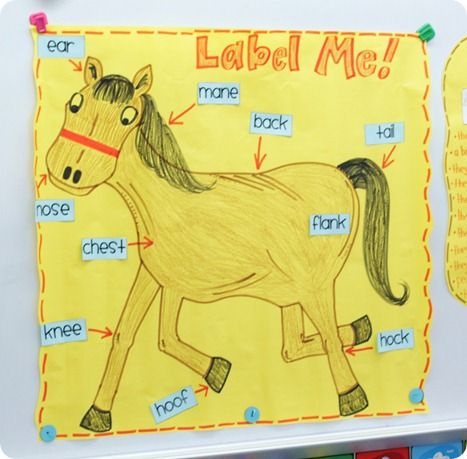 Classroom project on labels... students make a version of a horse, and create labels... whole group and small group