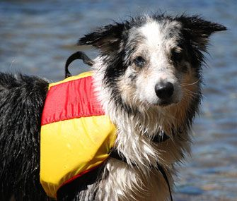 A life jacket is a great idea if you're taking your dog on or near water. Here's how to choose one.
