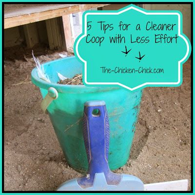 A few simple modifications to the chicken coop make it faster to clean and keep the coop cleaner in between dee cleanings.