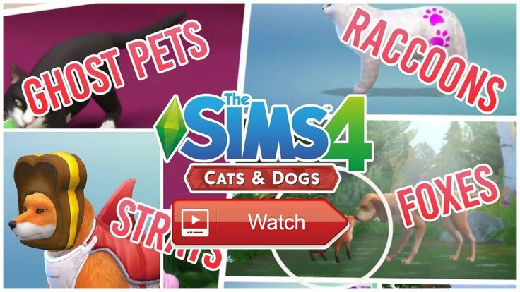 SIMS PETS CATS DOGS RACCOONS FOXES GHOST PETS AND MORE INFO Thoughts Speculations  SUBSCRIBE Sims Pets Cats Dogs Playlist Today were checking in on some of the new updatesconfirmations  on Pet Lovers