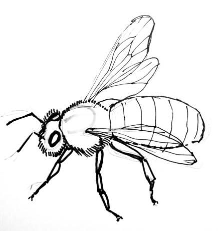 how to draw a honeybeehoneybee step by step drawing tutorial