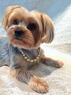 13-inch Gold Swarovski Pearl Dog Necklace by PascalineP on Etsy