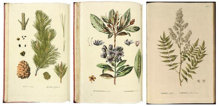 Наполнить дом цветами и растениями, которые никогда не завянут, можно с помощью ботанической живописи. Когда—то она служила чистому научному разуму, а теперь – чистой красоте.