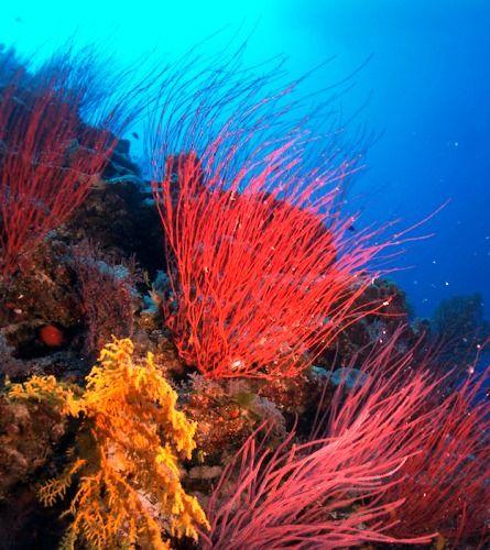 オーストラリア・グレートバリアリーフにはこんなに美しい珊瑚礁がたくさん。ケアンズ 旅行・観光のおすすめスポット