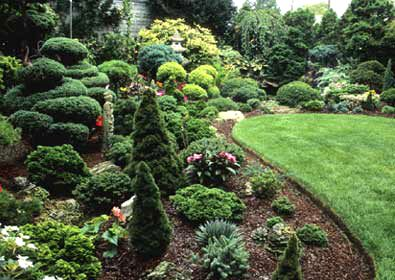 Conifer Garden Ideas beautiful display of landscaping with evergreens Long Island Conifer Garden