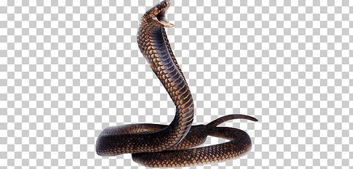 Cobra Snake Head Png Animals Snakes Cobra Snake Snake Png