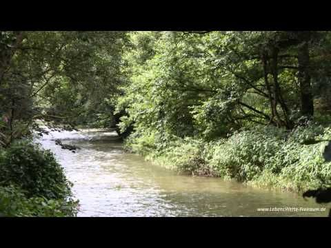 Heilmeditation #01 - LÖSEN UND ANNEHMEN ~ [Meditation Deutsch] - YouTube