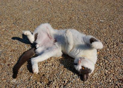 Facebook Cats Video Flea Collars Side Effects