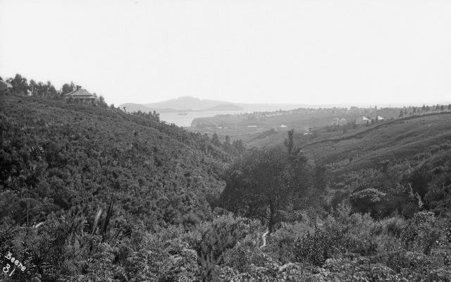 The view from our house 1850ish looking from Symonds St down Grafton gully to Rangitoto