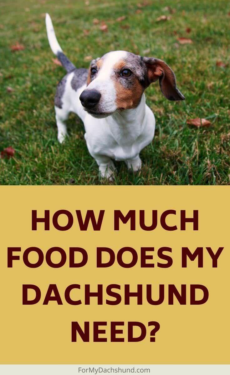 How much food should i feed my dachshund in 2020