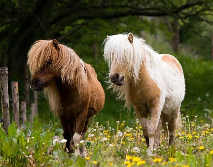 https://i.pinimg.com/736x/a9/37/6e/a9376e12d172bf550cedb1ab58f75e84--little-pony-best-friends.jpg