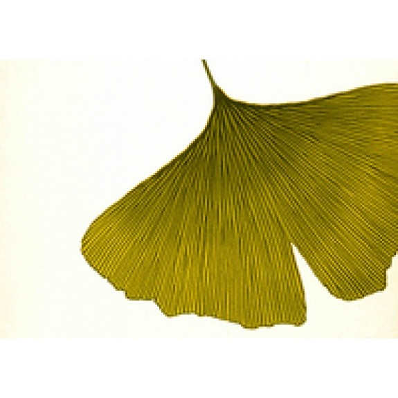 Biloba Behang Marimekko® 27029 Groen - Hookedonwalls