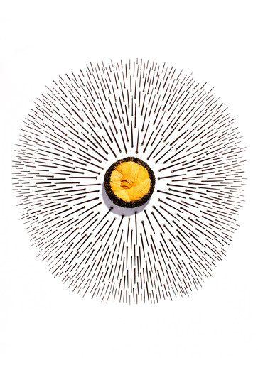 WSJ Sea Urchin