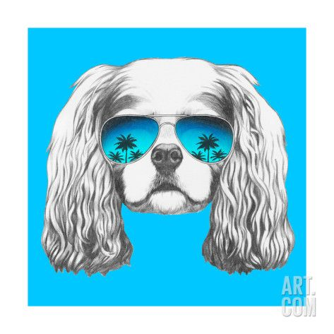 Art.fr - Reproduction d'art 'Portrait of Cavalier King Charles Spaniel with Mirror Sunglasses. Hand Drawn Illustration.' par victoria_novak
