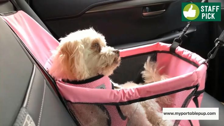 All of your pup must journey in consolation, security and magnificence