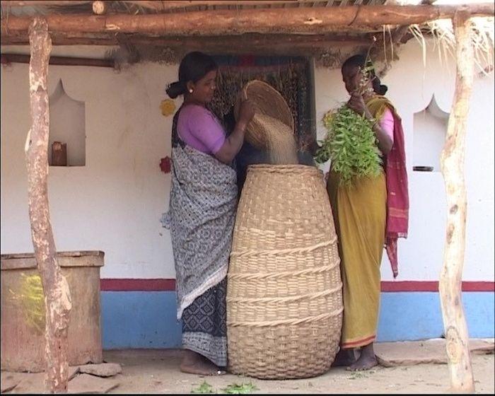 Inde - Les semences sont conservées d'une année sur l'autre, avec des pesticides naturels, comme des feuilles de margousier.