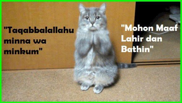 Download 61+  Gambar Kucing Lucu Dan Imut Bergerak Terlihat Keren