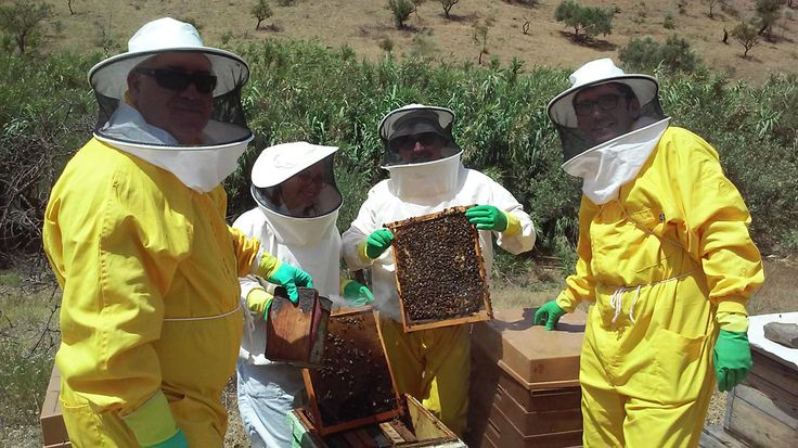 Bee Garden y Universidad Málaga Proyecto en común: http://ssimalaga.com/uma-y-bee-garden-proyectos-en-comun #Malaga #bee #uma