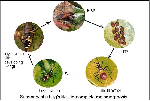 analysis grasshopper and bell cricket Yasunary kawabata uses this title as a symbol to differentiate between two different kinds it also reflects the author affiliations with his culture, especially when he describes the base of the embankment was a bobbing cluster of beautiful varicolo.