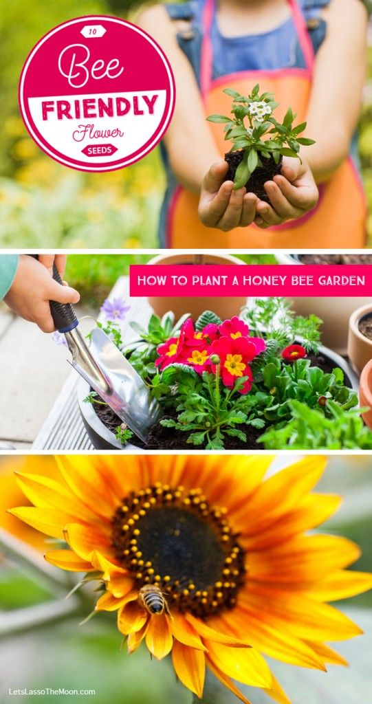 How to Plant a Honey Bee Garden With Kids: List of 10 bee-friendly flowers *Saving this gardening reference list