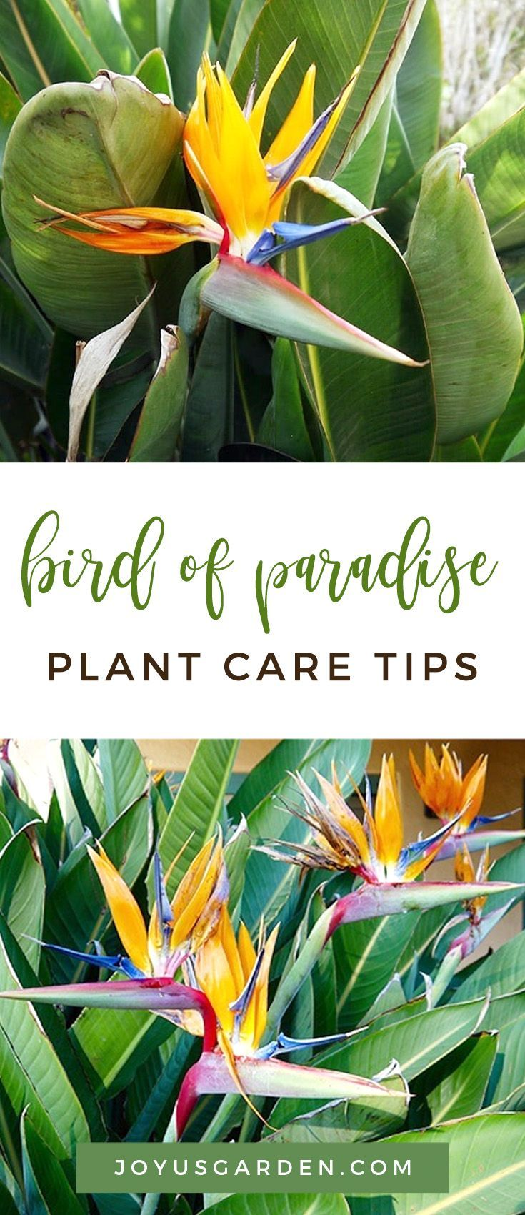 Pin On Gardening Indoors House Plants