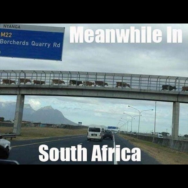 Only in South Africa...Enjoy the Shit South Africans Say!