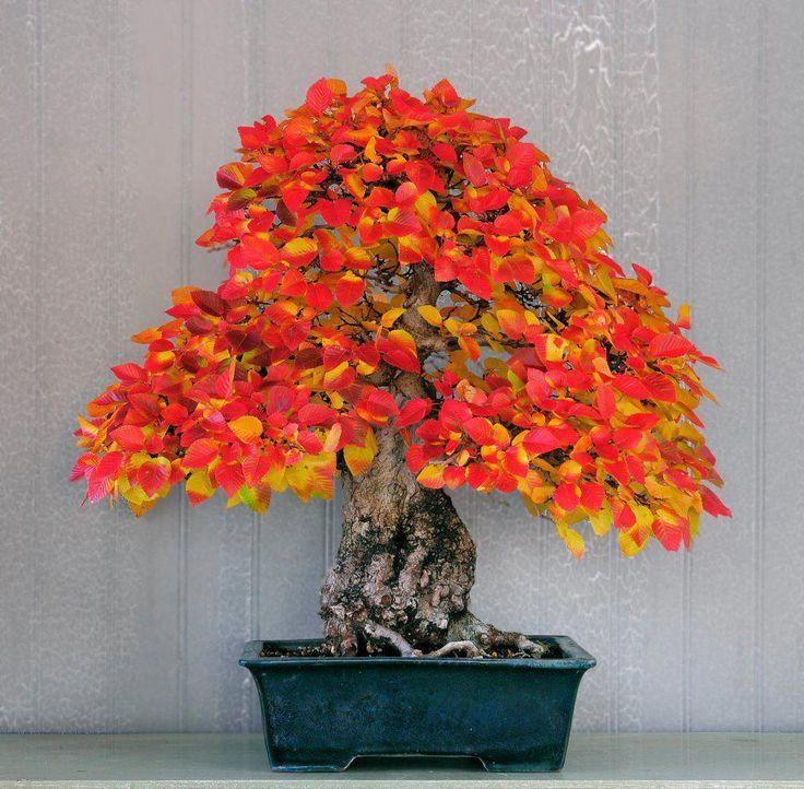 Fantastic colours on this bonsai tree.