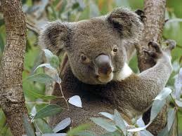 животные австралии утконос - Поиск в Google