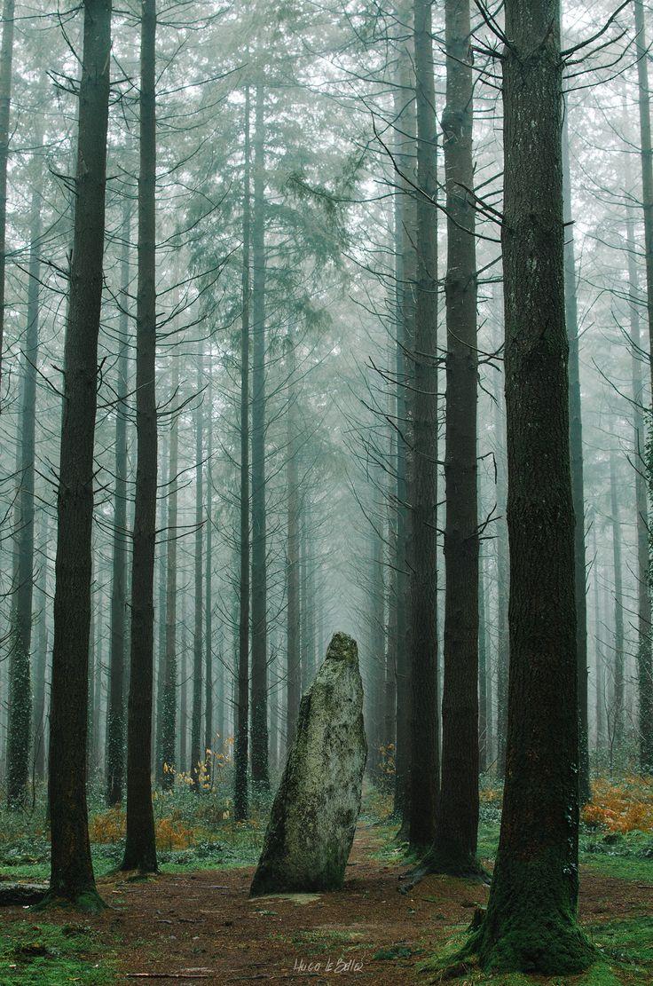 Baud ~ Menhir breton dans la Forêt Brumeuse de Camors ~ Bretagne, Morbihan