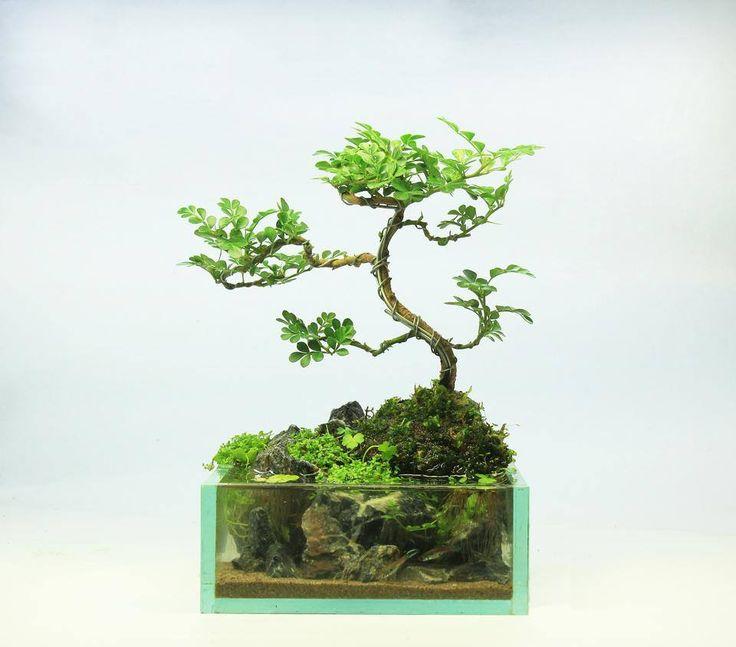 Aquascape Tree: 17 Best Images About Paludarium On Pinterest