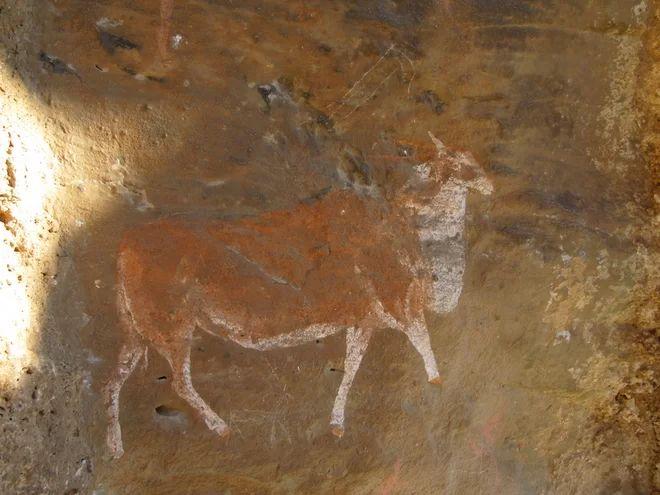 afrikai antilop  Kredit: Adelphine Bonneau  A festmény egy eland Dél-Afrikából