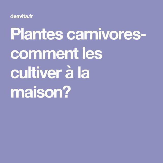 ... Plante Carnivore sur Pinterest  Plantes Carnivores, Dionée et