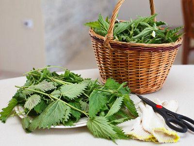ekologiczne środki ochrony roślin -