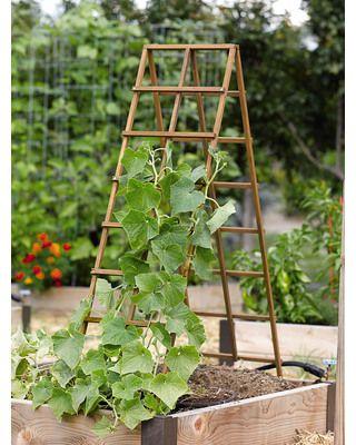Kitchen Garden Trellis: increases plant air circulation, perfect for gardening!